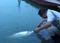 水库路亚16.8斤大巧嘴鱼