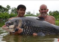 面包也能钓到最重暹罗鲤鱼